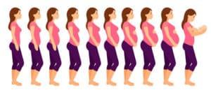 Raskauden Eteneminen
